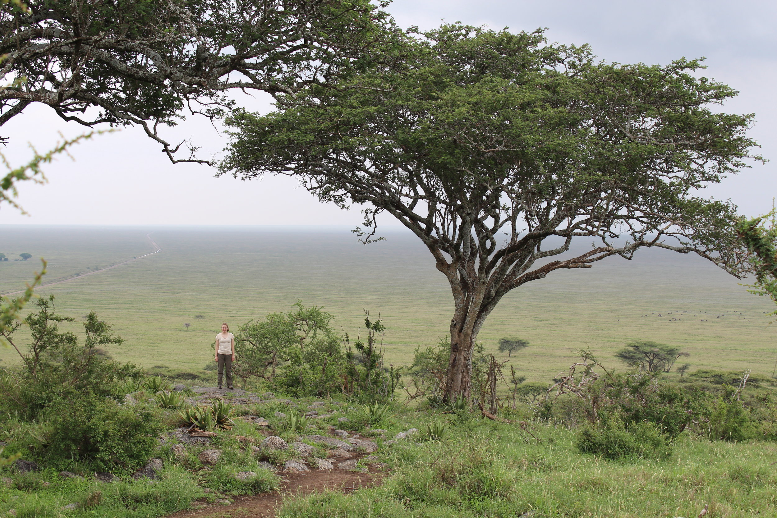 Looking over the Serengeti from Naabi Hill
