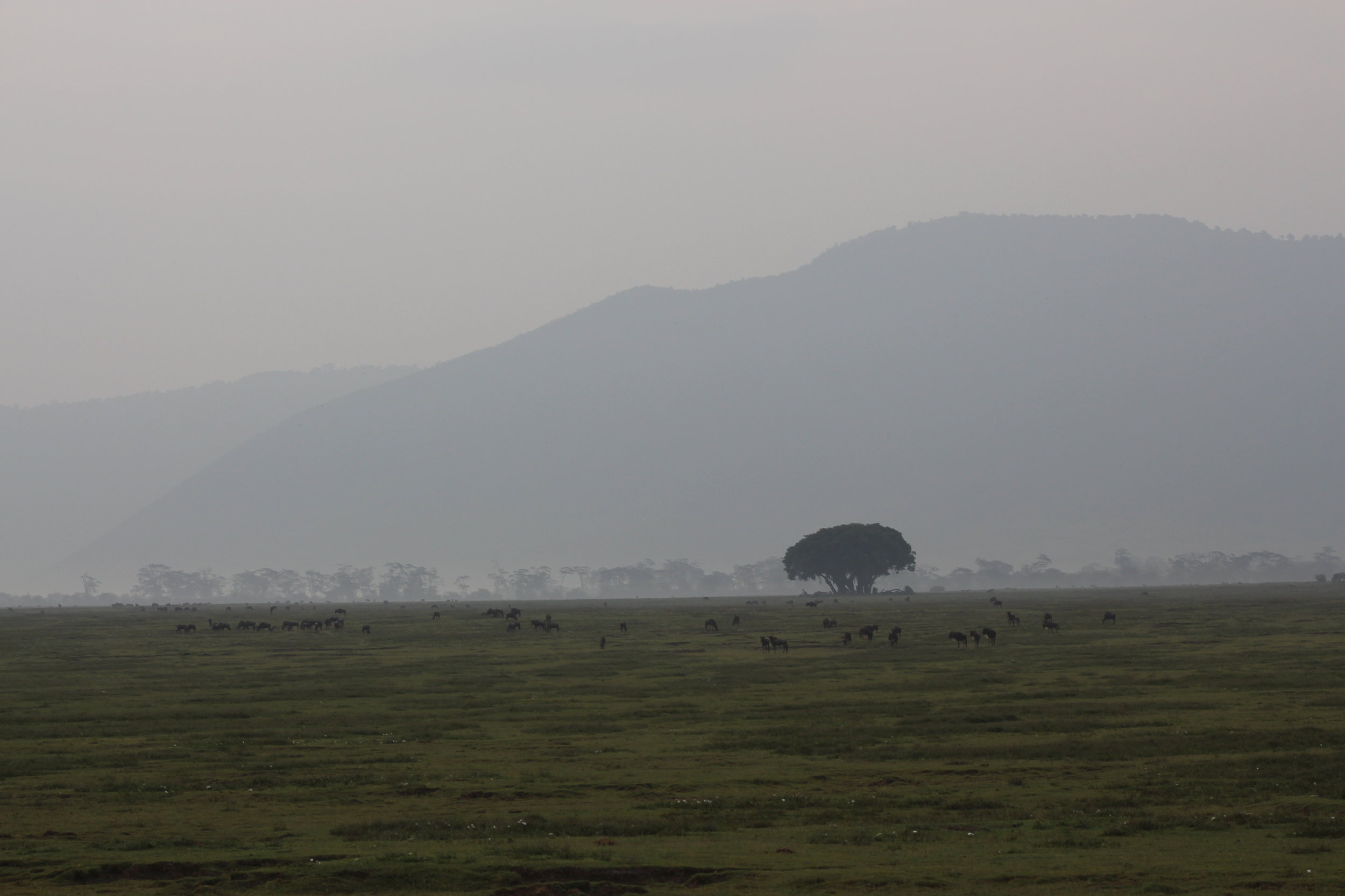 Floor of Ngorongoro Crater