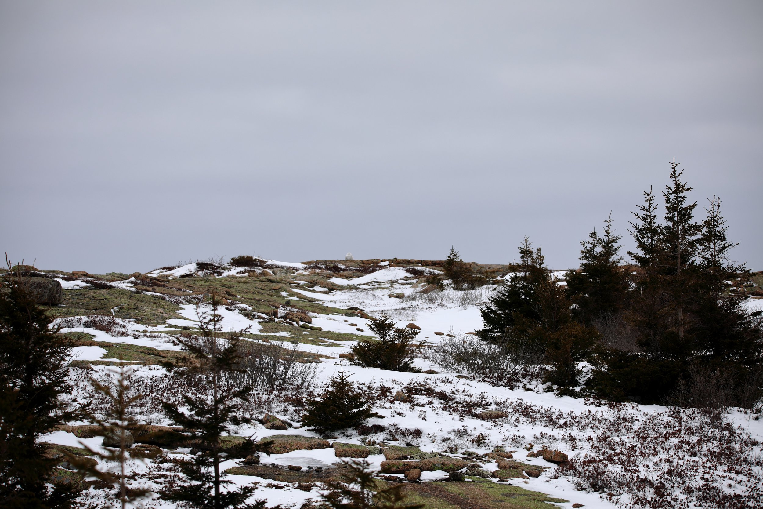 Can you find the snowy owl?