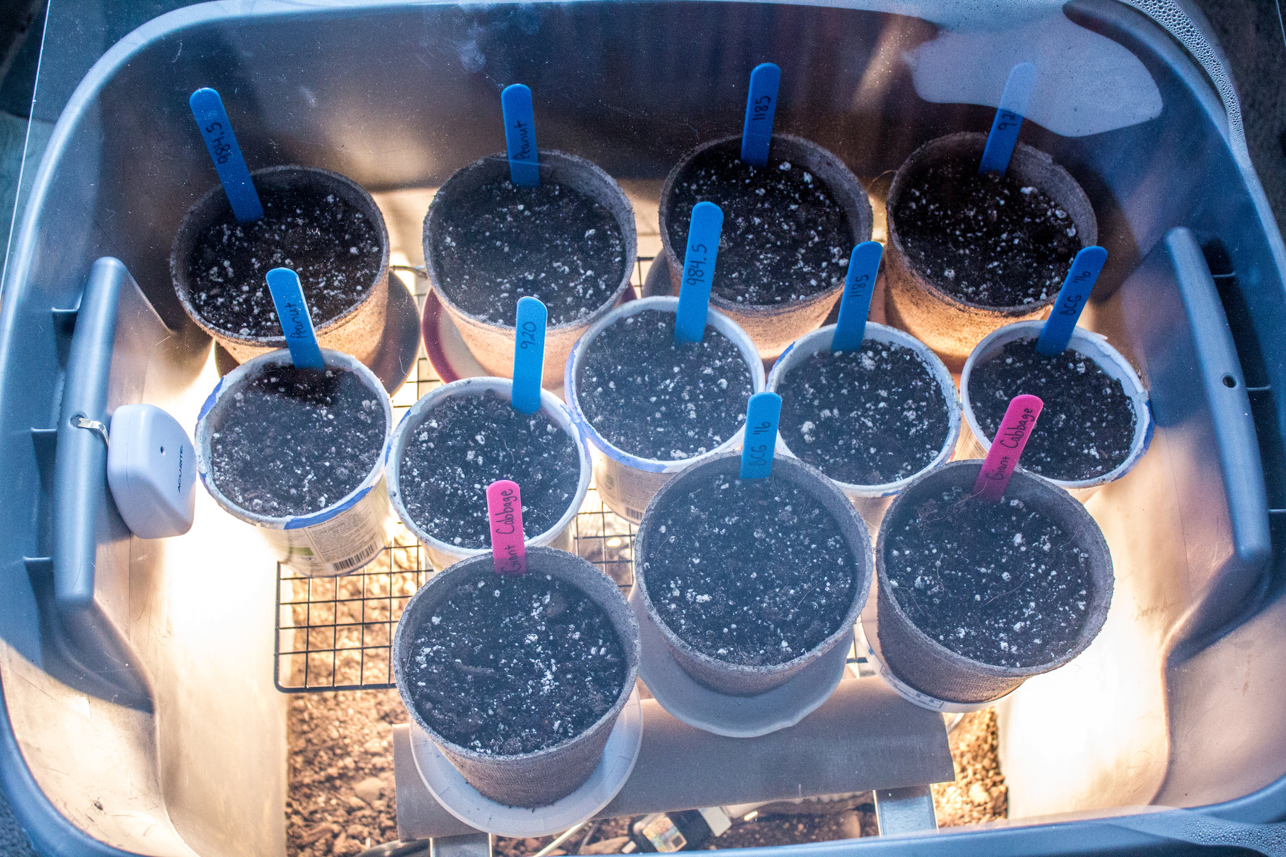 My homemade germination chamber.