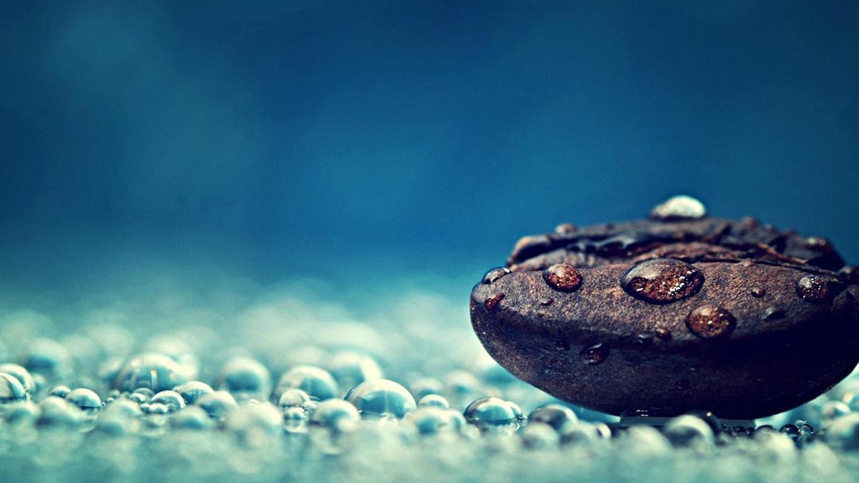 water-drops-photography-macro-seeds-free-hd-839681.jpg