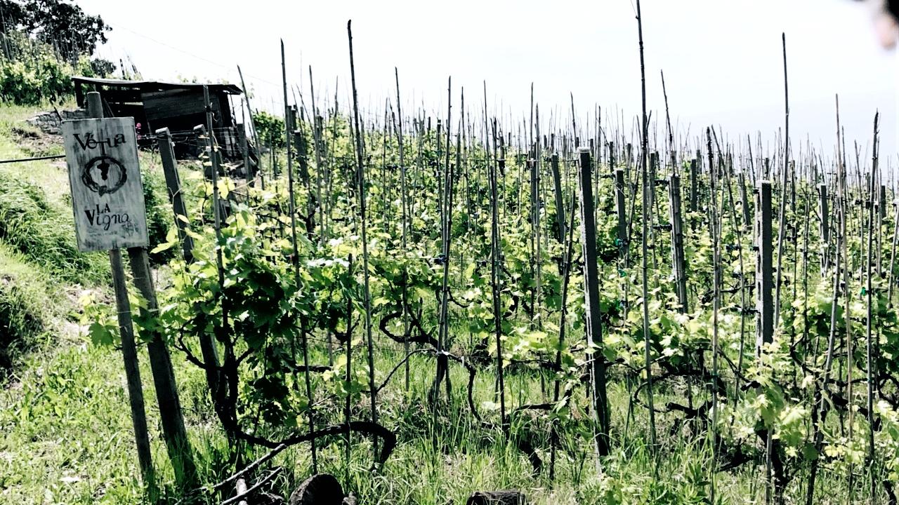 Cliffside vineyards in Cinque Terre