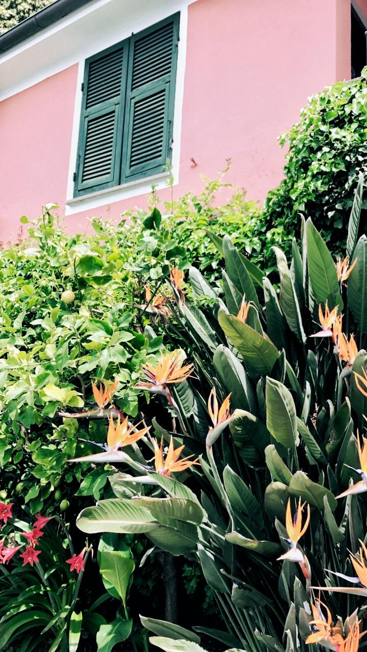 Birds of paradise in Hotel Porto Roca