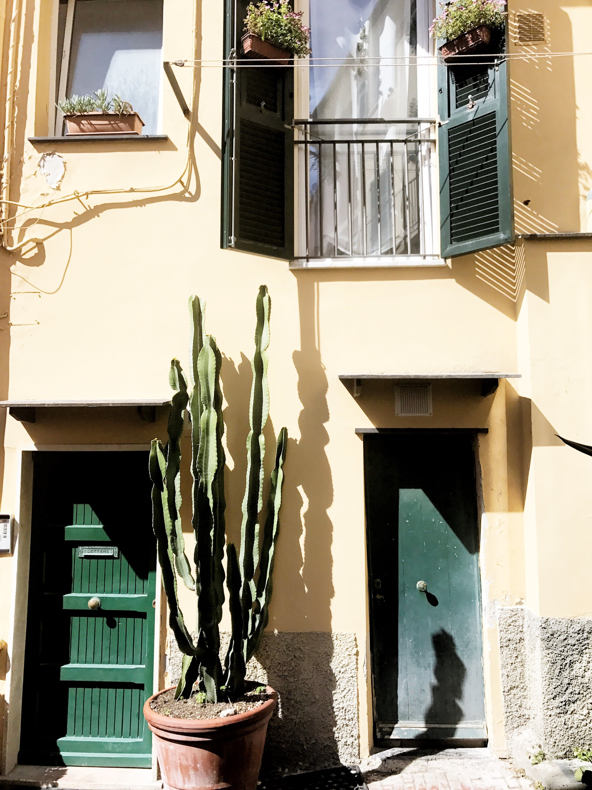 Cactus friends in Boccadasse, a neighborhood in Genova, Italy