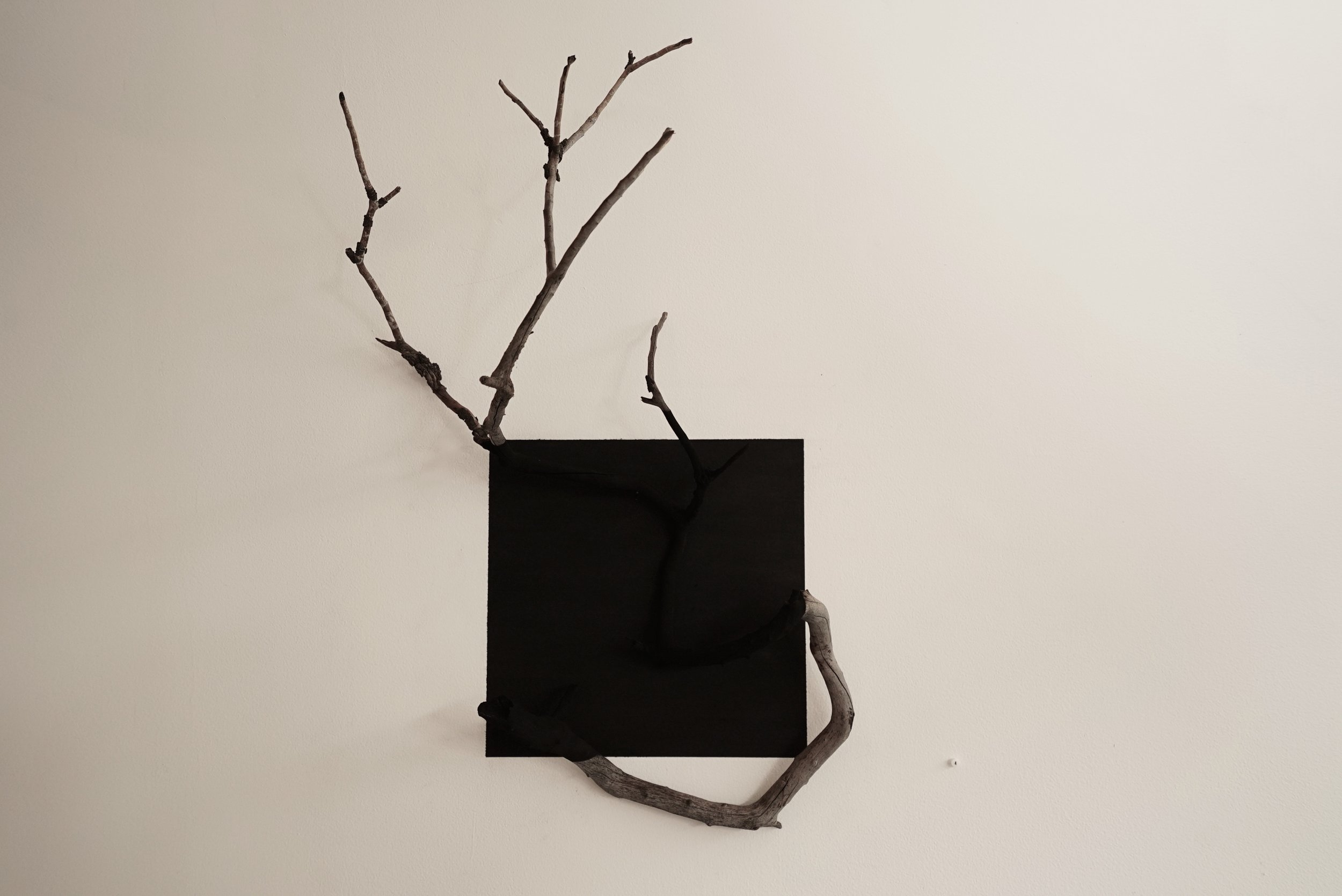 The Disappeared. Found Wild Fires Wood & Charcoal