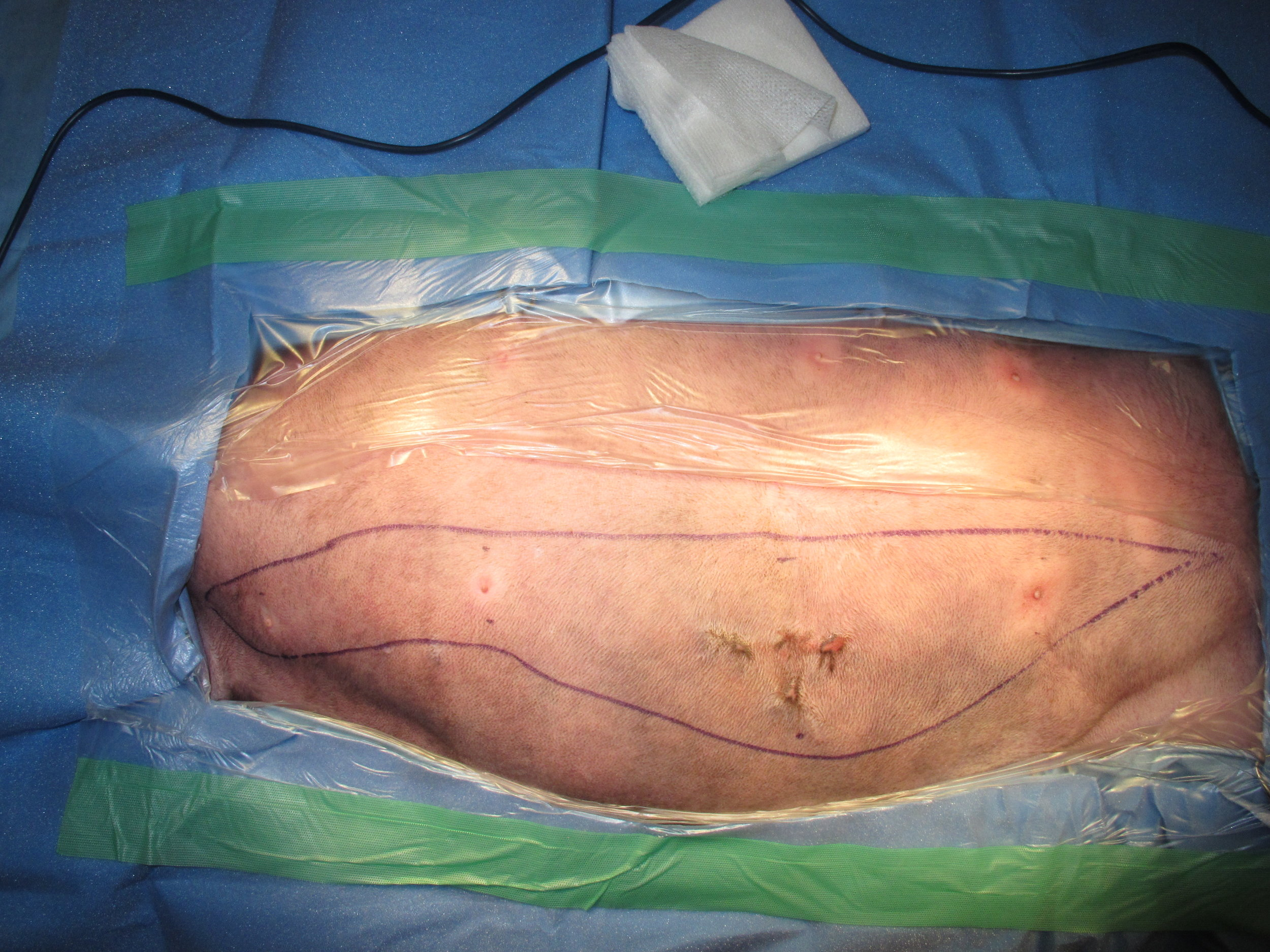 Unilateral Mastectomy - Cat