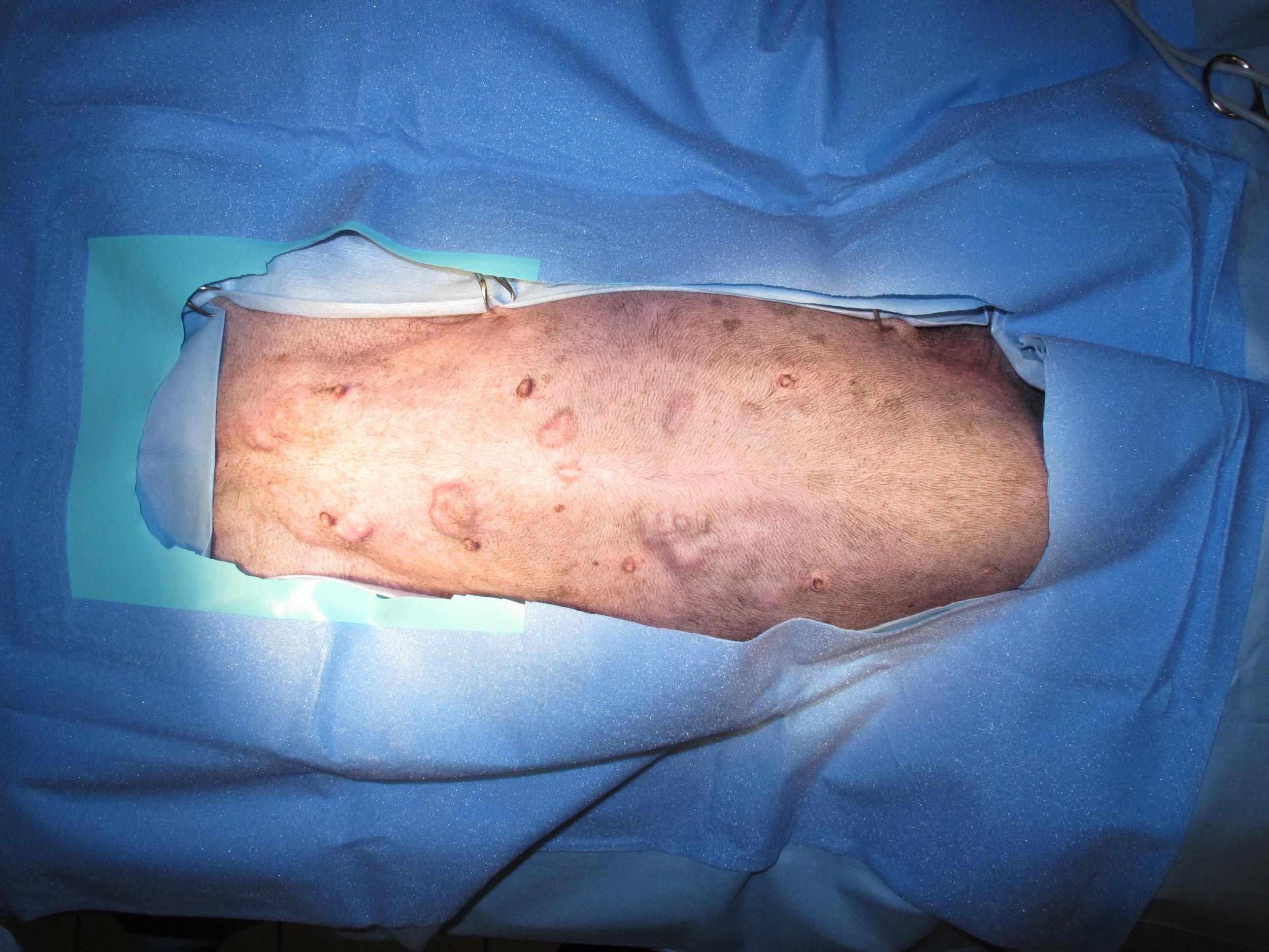Mammary Adenocarcinoma