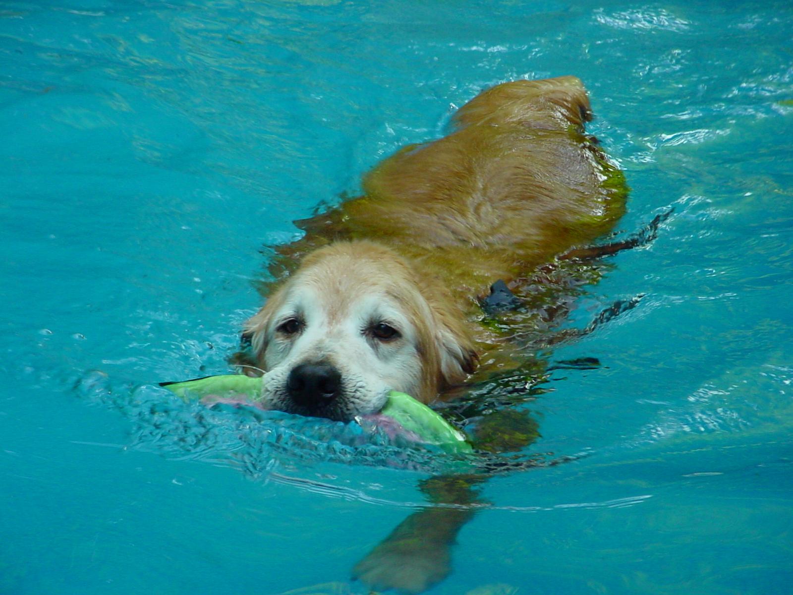 Return to Swimming Post-Amputation