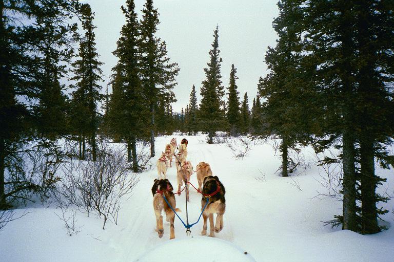 dogs on trail.jpg