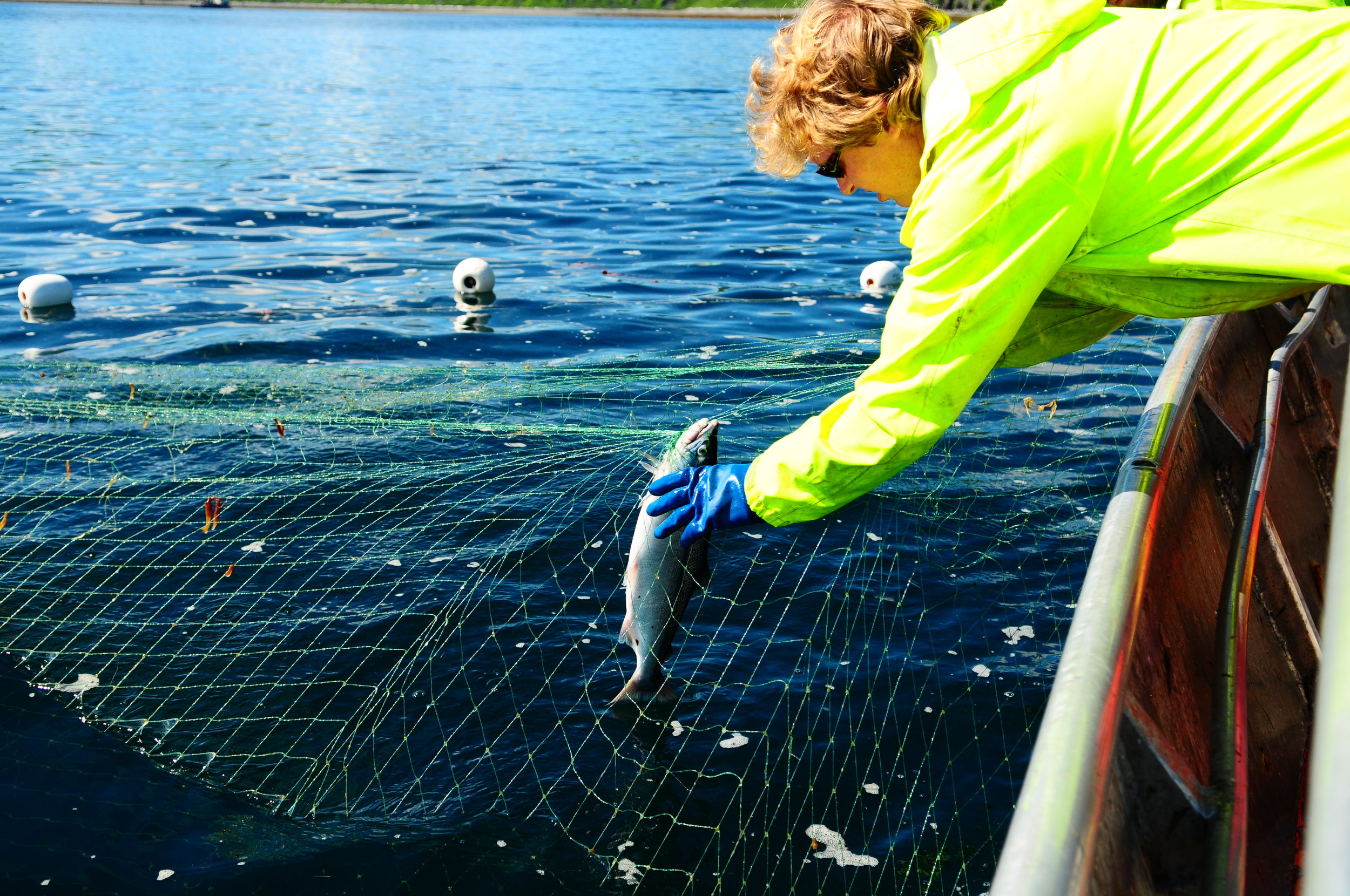 fish in net in water.JPG