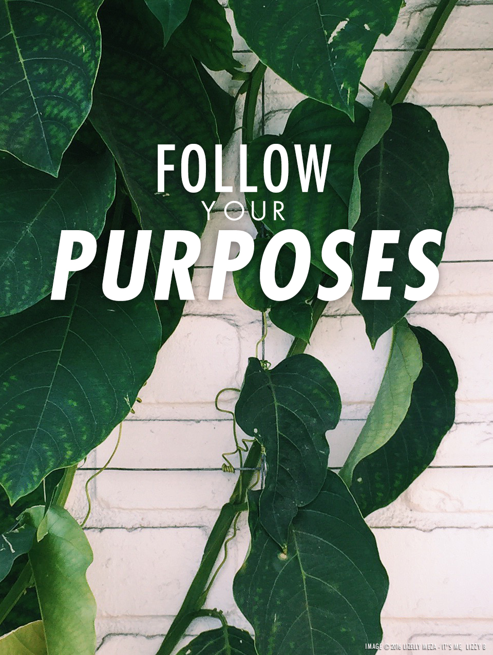 Follow Your Purposes // It's Me, Lizzy B - Musings on Life, Business, & The Pursuit of Curiosity // Personal blog of Lizelly Meza from Lizzy B Loves
