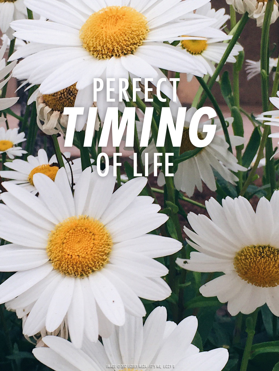 Trust the Perfect Timing of Life// It's Me, Lizzy B - Musings on Life, Business, & The Pursuit of Curiosity // Personal blog of Lizelly Meza
