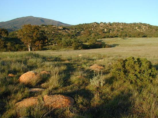 Native Grassland.jpg