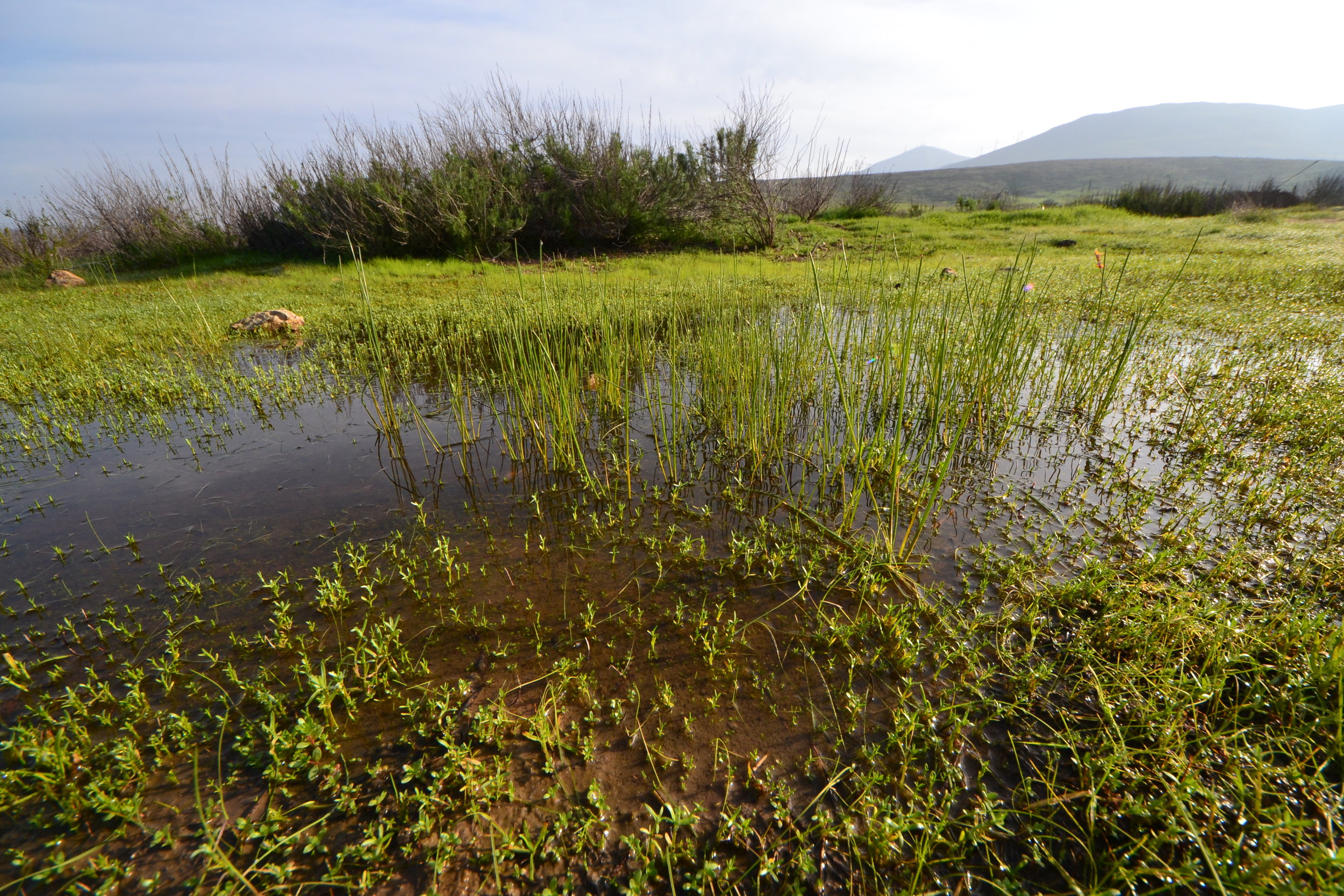 Shinohara Vernal Pools (by Lisa Cox)