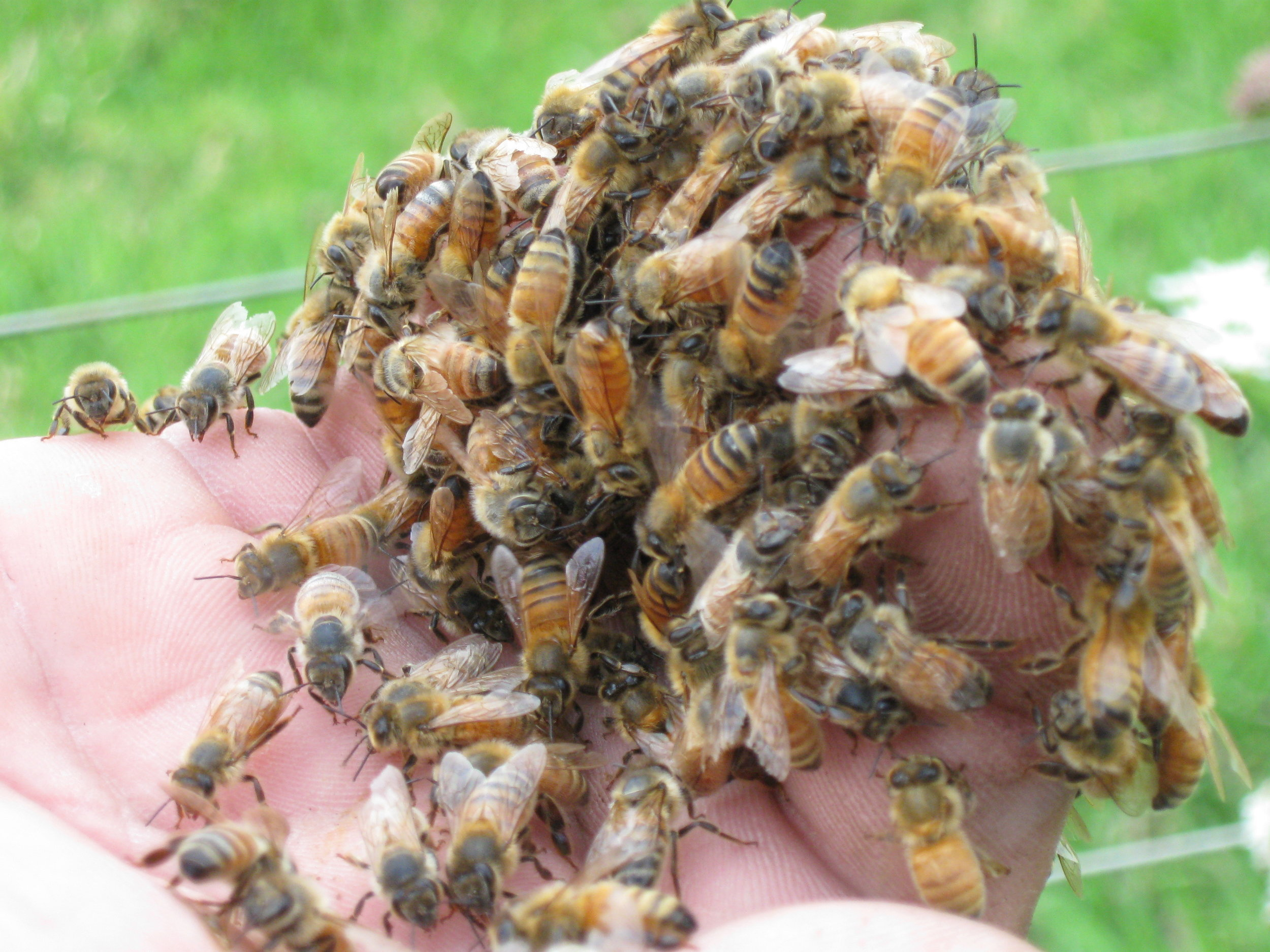 Handling some bees with care