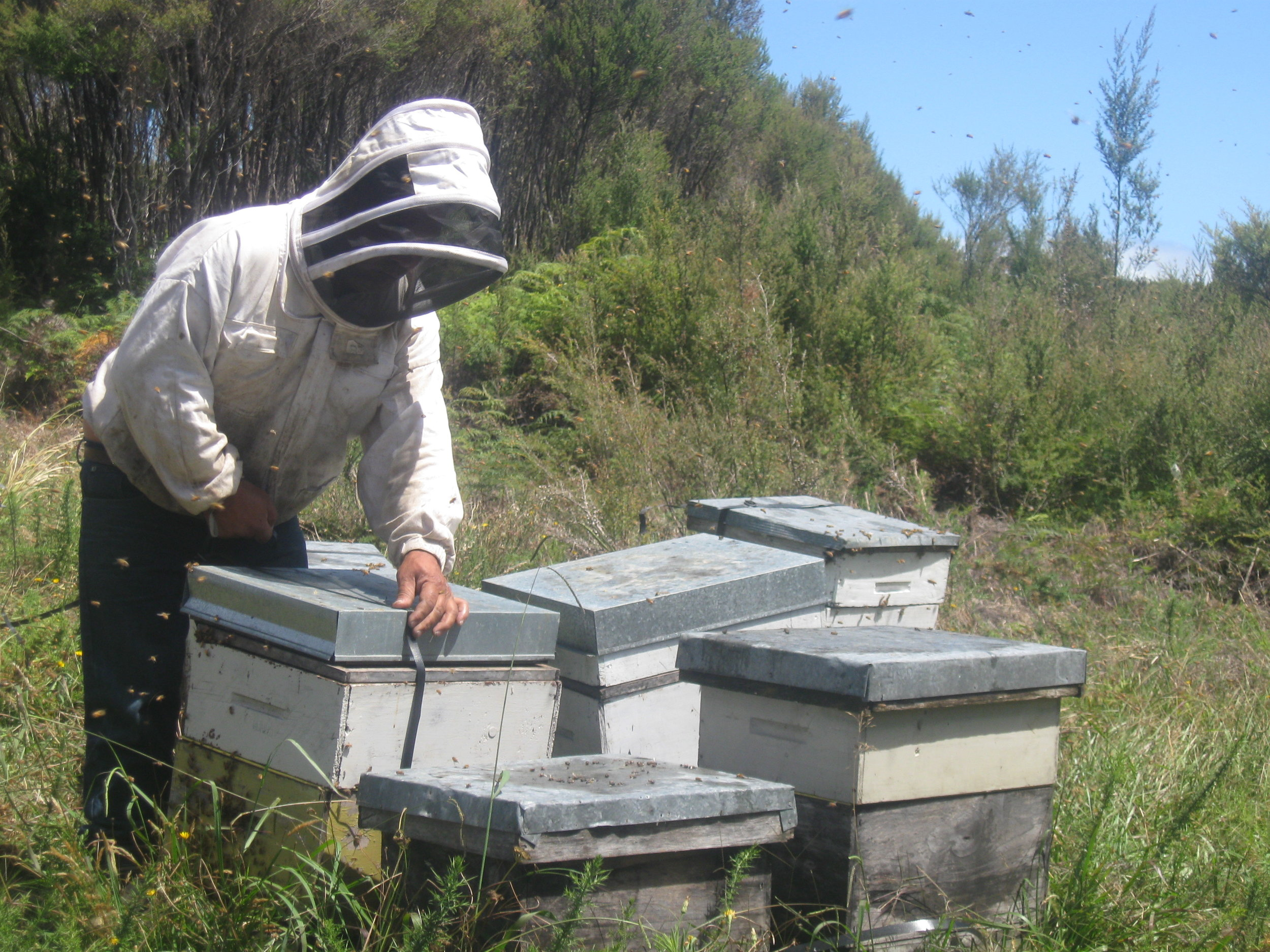 Strapping up a hive after checking
