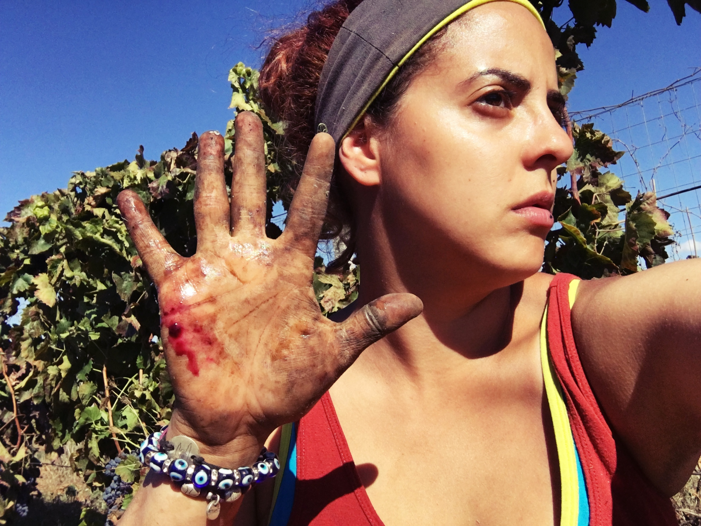 Harvest work can be brutal- as demonstrated by sommelier Yumi Ortiz