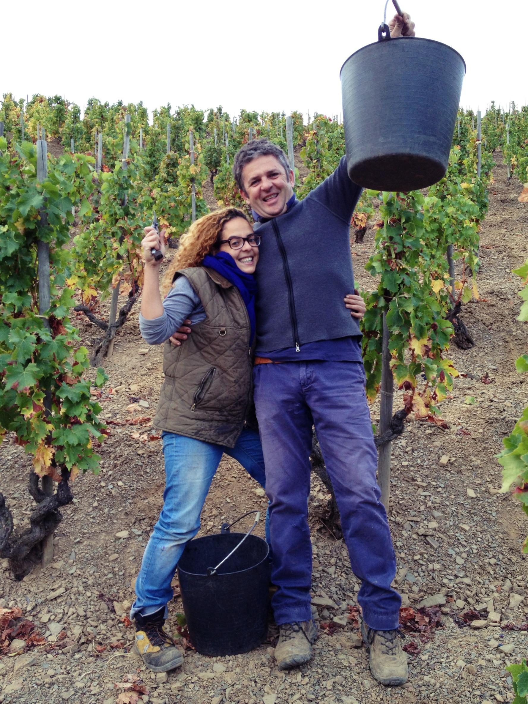 palacios-vineyard-harvest-0817