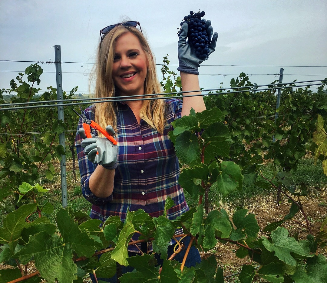 Sarah Tracey visits Esterhazy winery in Burgenland, Austria. Pinot Noir grape harvest in autumn 2017.