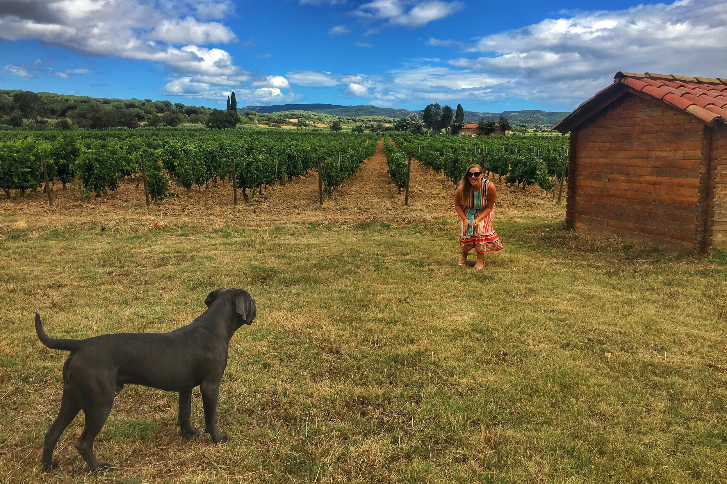 Organic and Biodymanic vineyards are safe for children and animals to run around in!