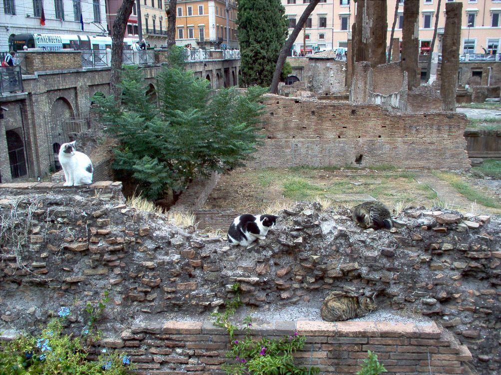 Cats-at-Largo-di-Torre-Argentina.jpg