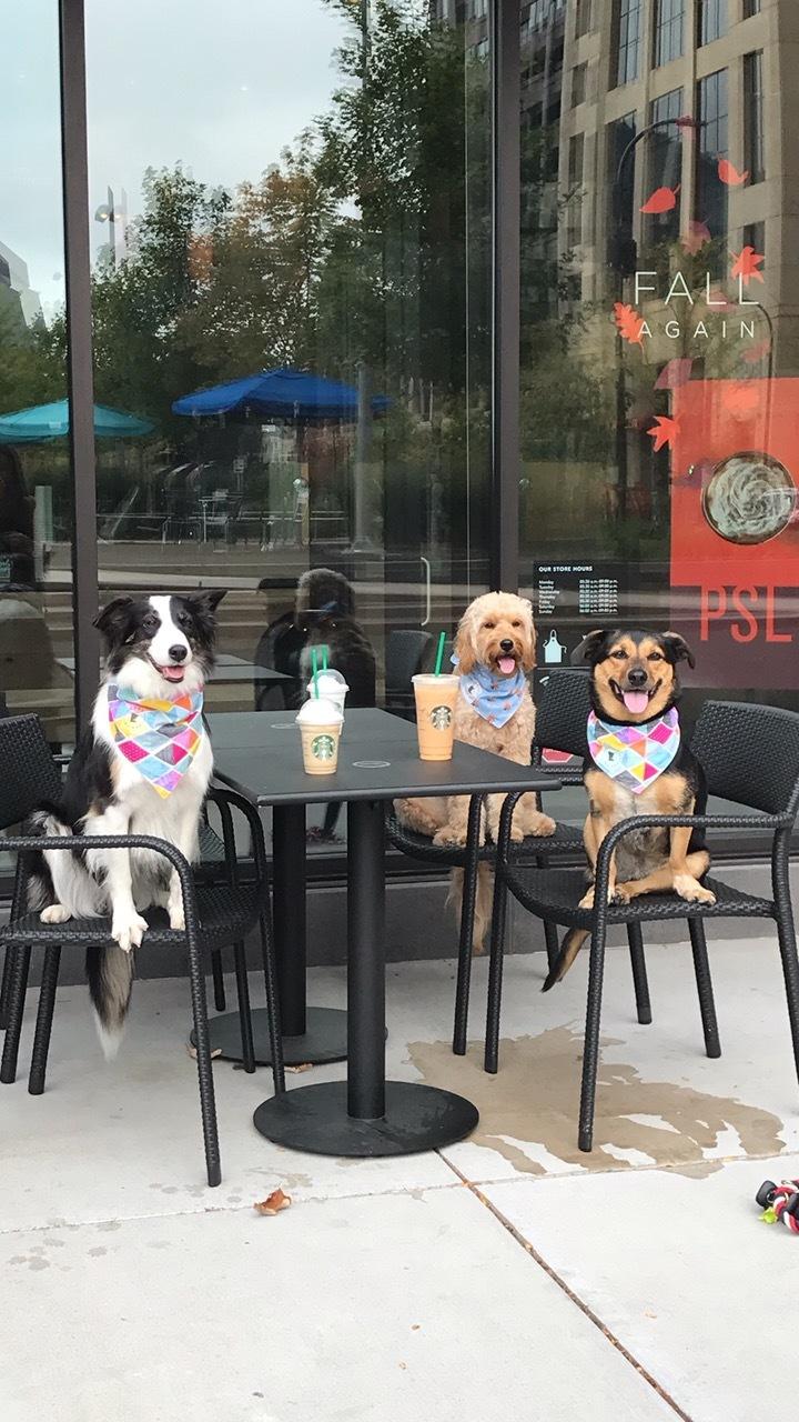 Starbucks Bitches.JPG