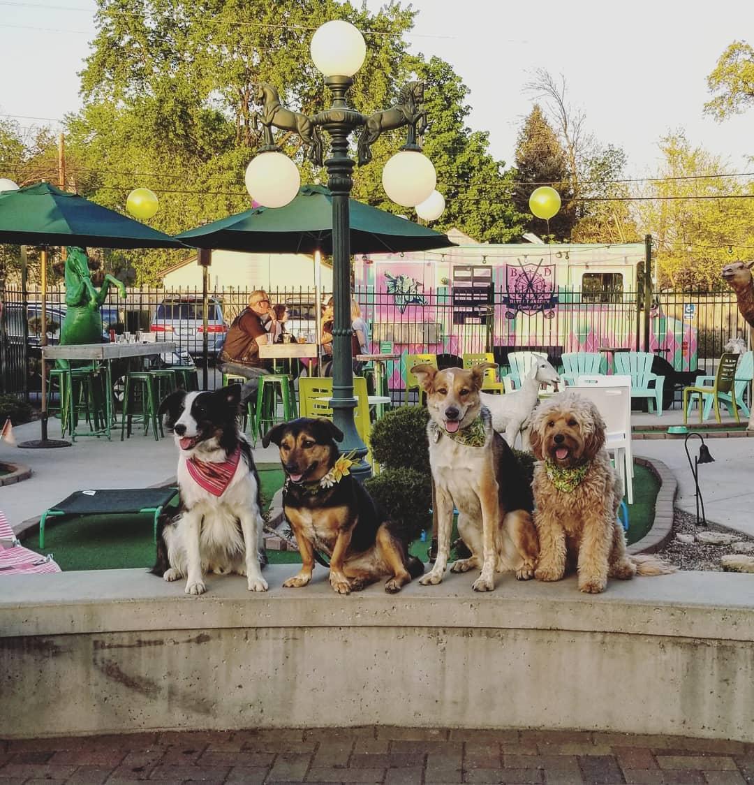 Betty Danger Pups.jpg