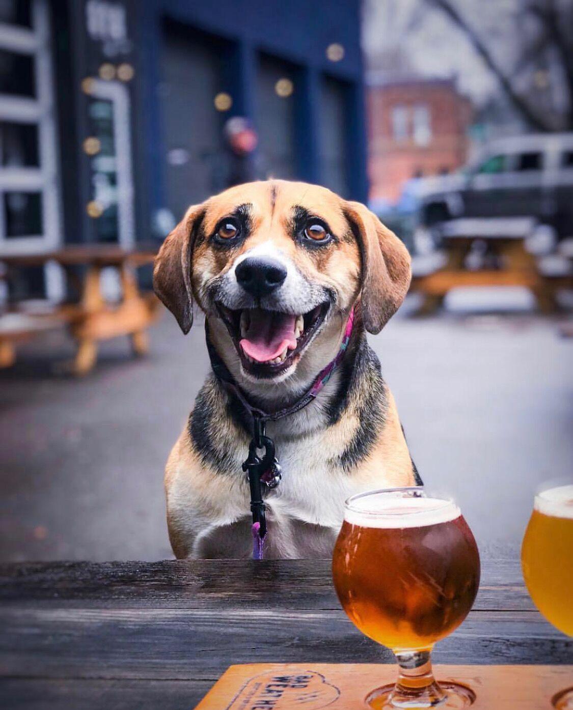 Doggone Nice Beer Day.jpeg