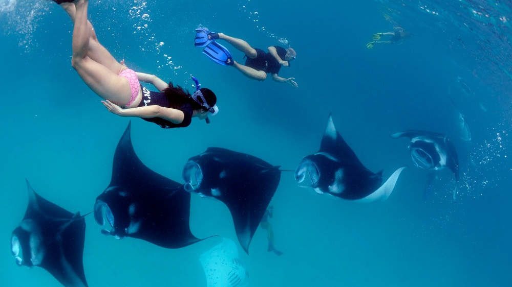 Photo by  Manta Trust