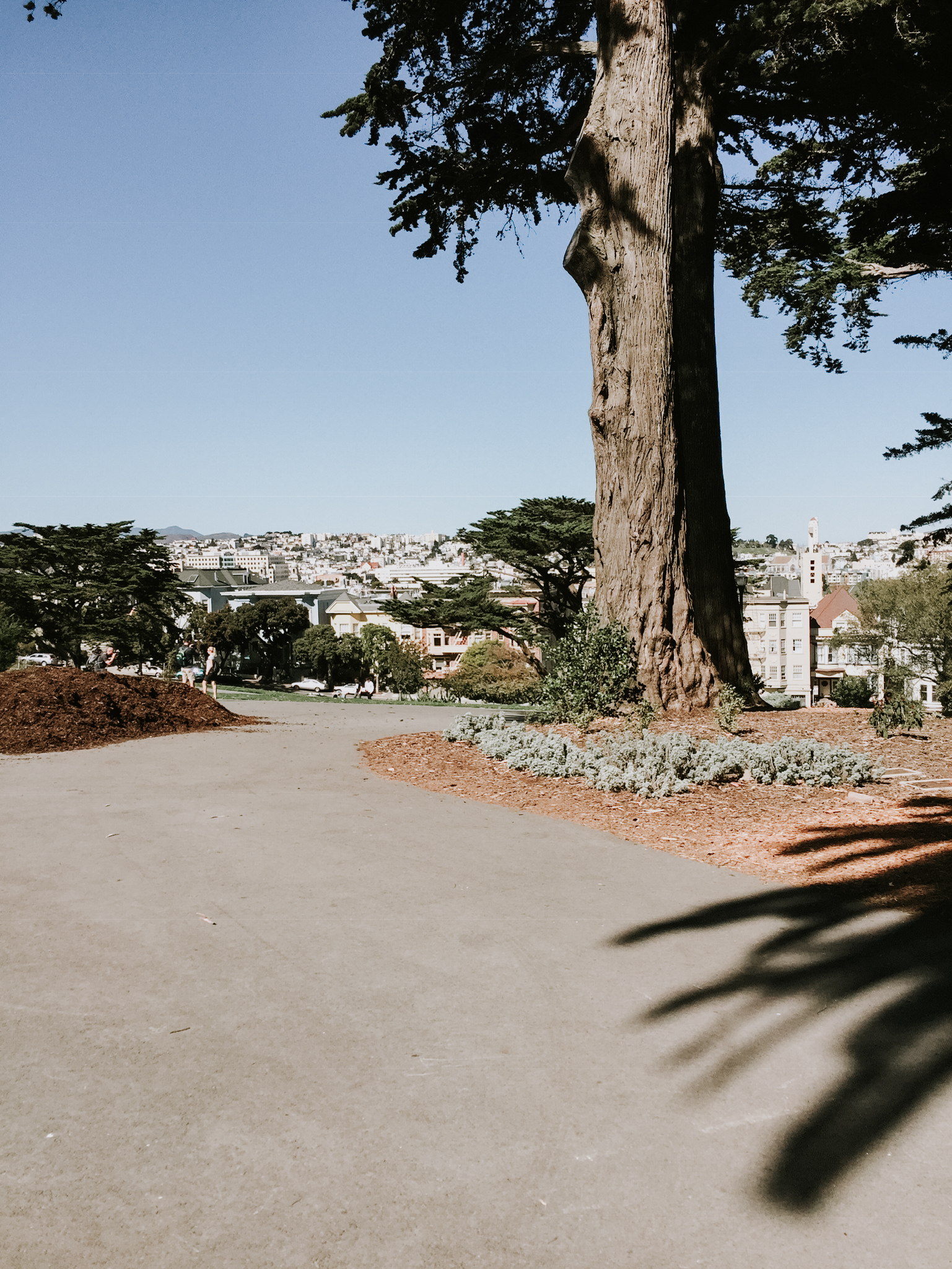 Our trip to San Francisco - the painted ladies park