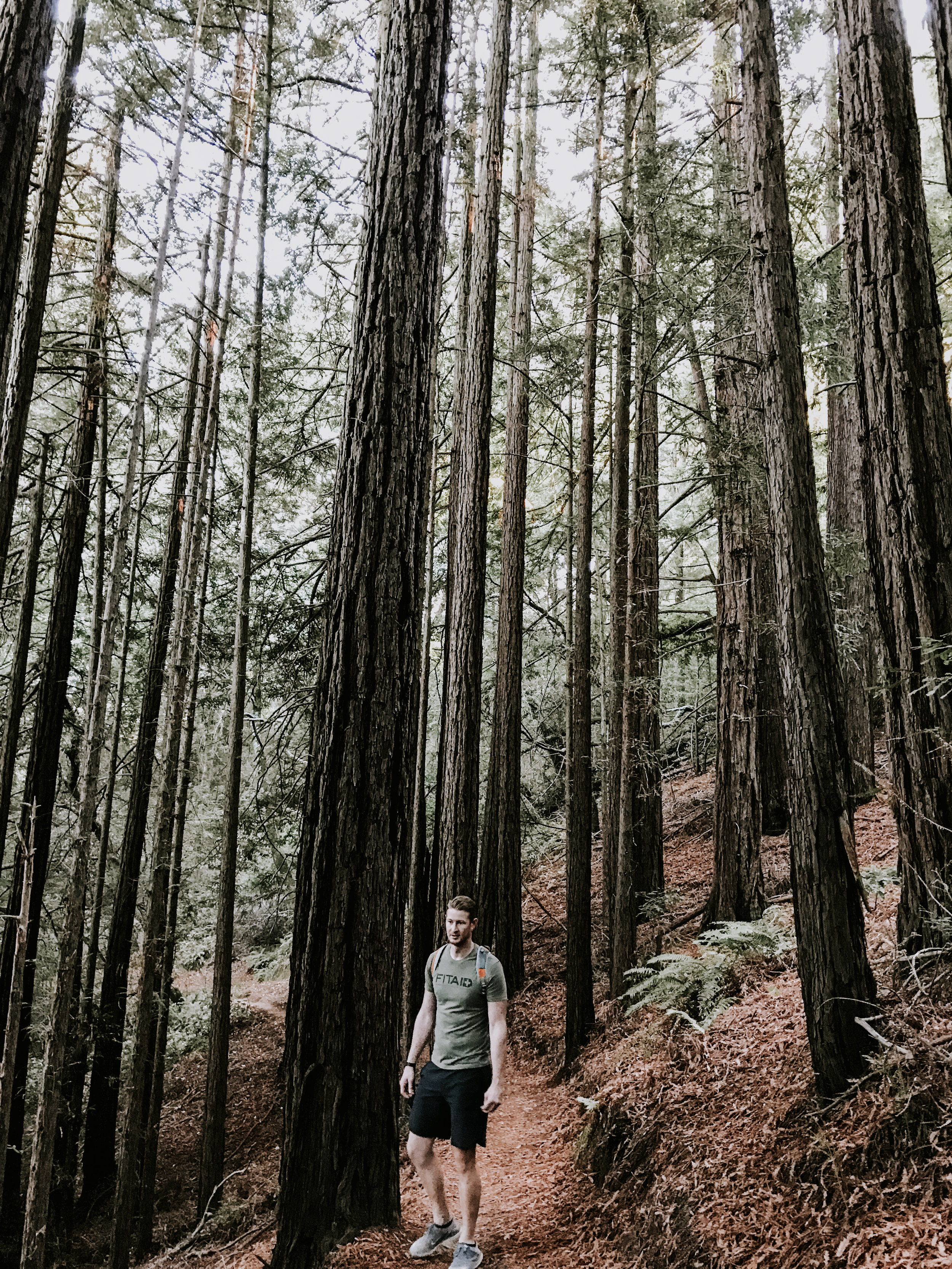 our trip to San Francisco - hiking in the redwoods in Mill Valley