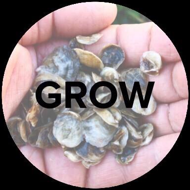 Grow (1).jpg