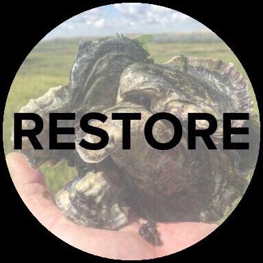 Restore.jpg