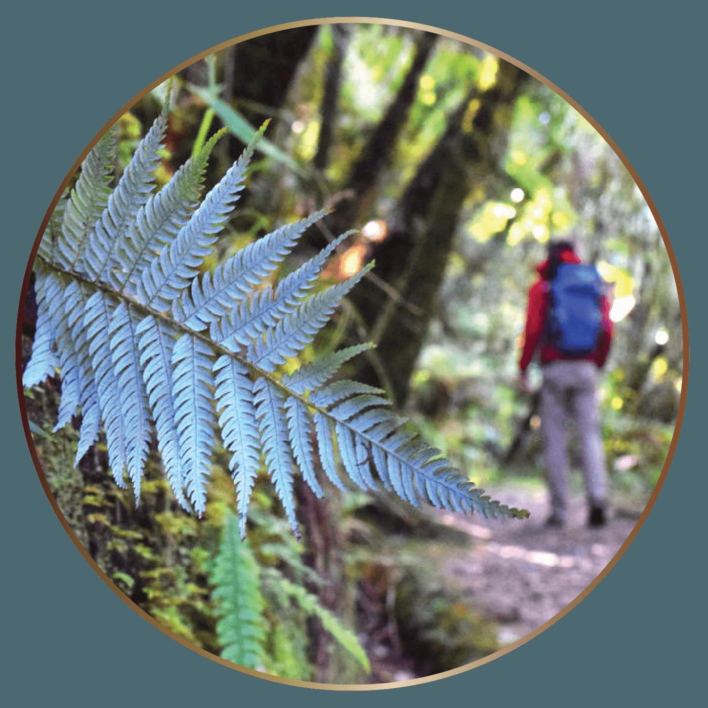 TIC Walking & Hiking Tairua (B).png