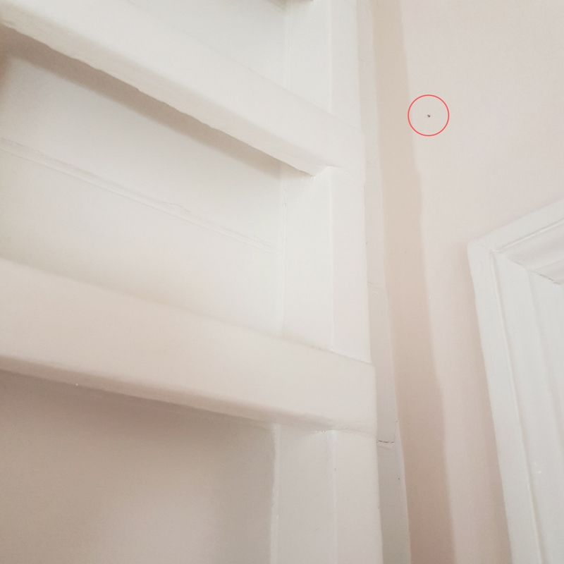 That small dot in the middle of the red circle is a clothes moth. Small, but easy to spot when you are looking.