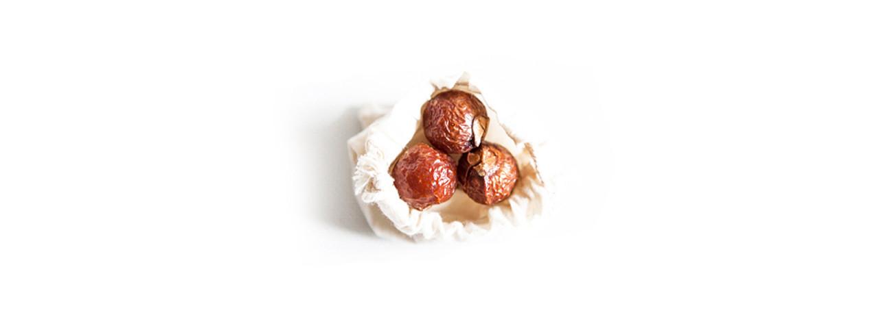 Sådan ser sæbebær ud når de er fyldt med saponin. De bliver helt tynde og blege, når der ikke er mere saponin i dem.