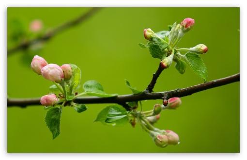 spring_buds_macro-t2.jpg