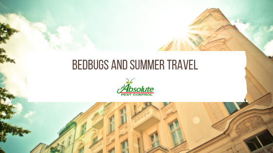 APC-Bedbugs-and-Summer-Travel.png