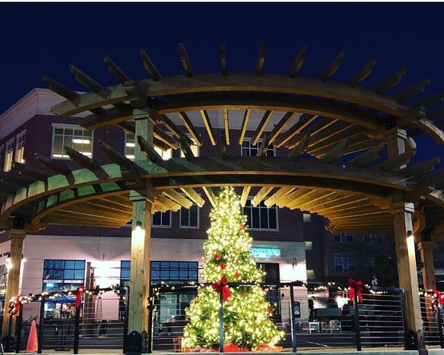 Christmas Tree on Pergola.png