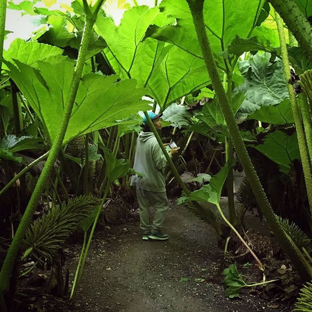 Inside a giant cabbage #jungle