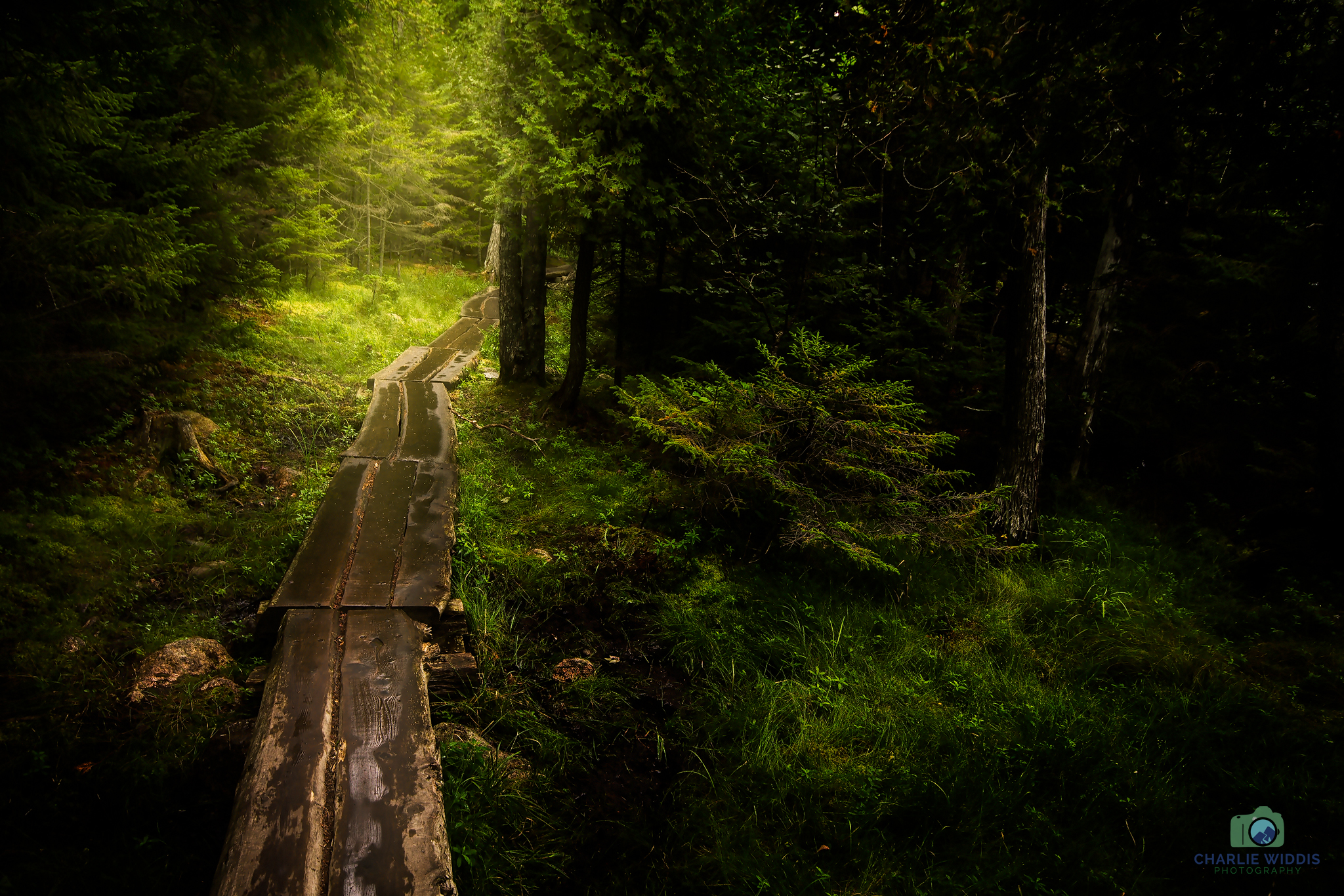 This image I created with depression in mind. Walking through a dark forest with a light at the end of the path.