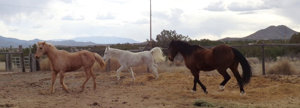 The horses have space to move around in their arena. Good nutrition and feelings of safety and hope keep them mobile.