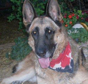 Handsome Baxter