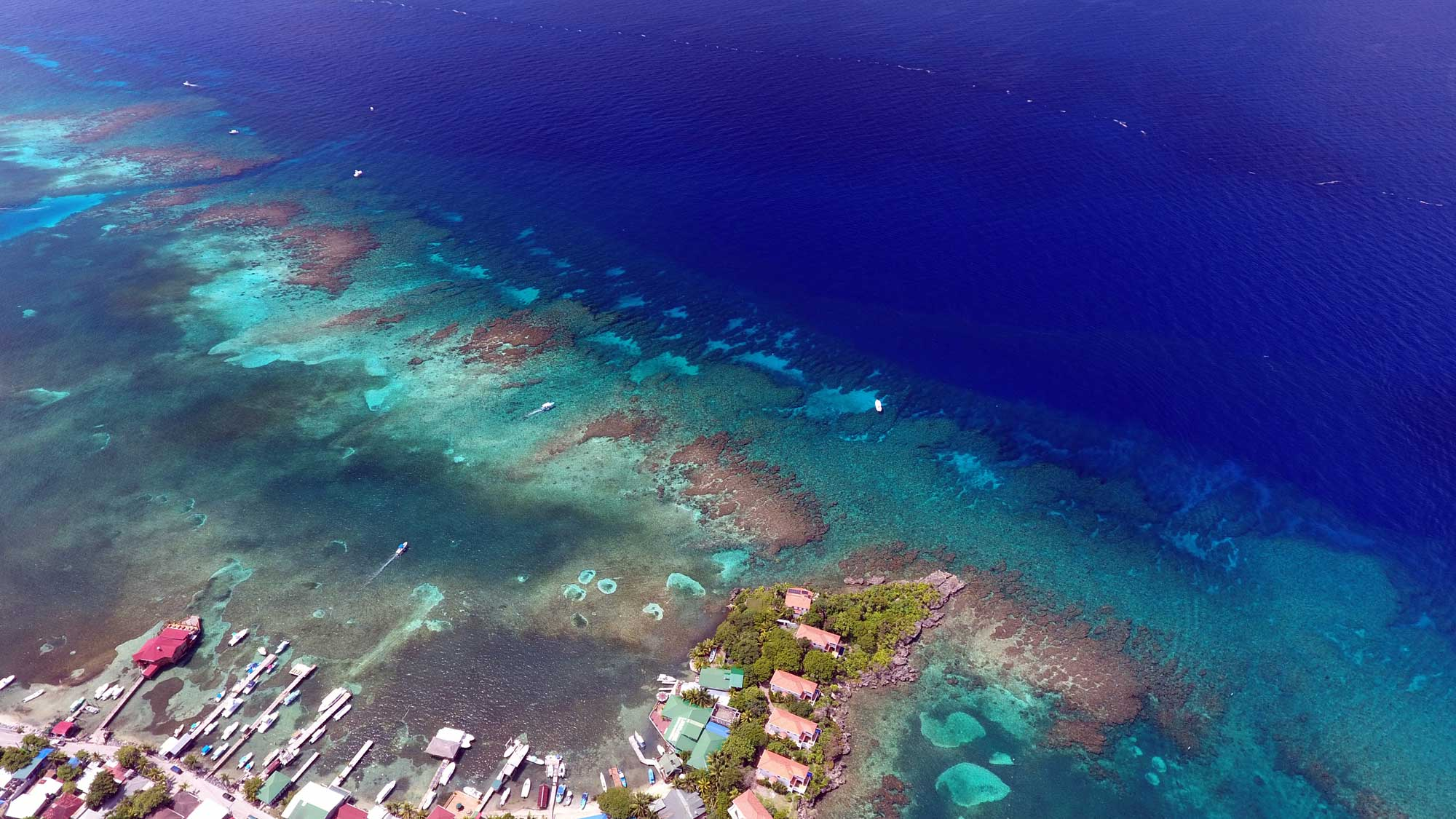 The nearest dive site to Coconut Tree Divers