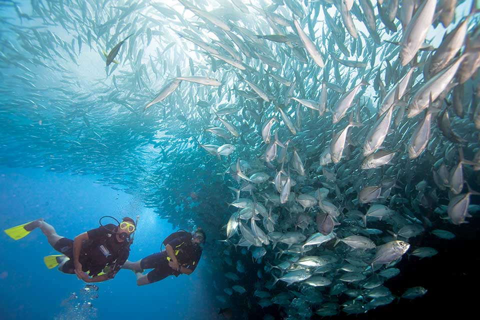 PADI scuba instructors surrounded by fish