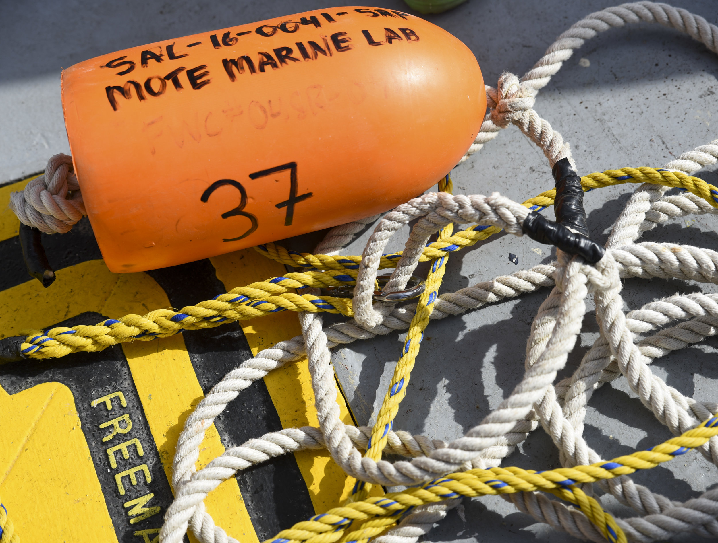 An orange floater lies on the outside deck of the R/V Bellows.The brightly-colored floater was attached via rope to a baited hook, which was left in the ocean in the hopes of attracting a shark. After a shark was captured, it was brought on board, studied, and then released back into the water.