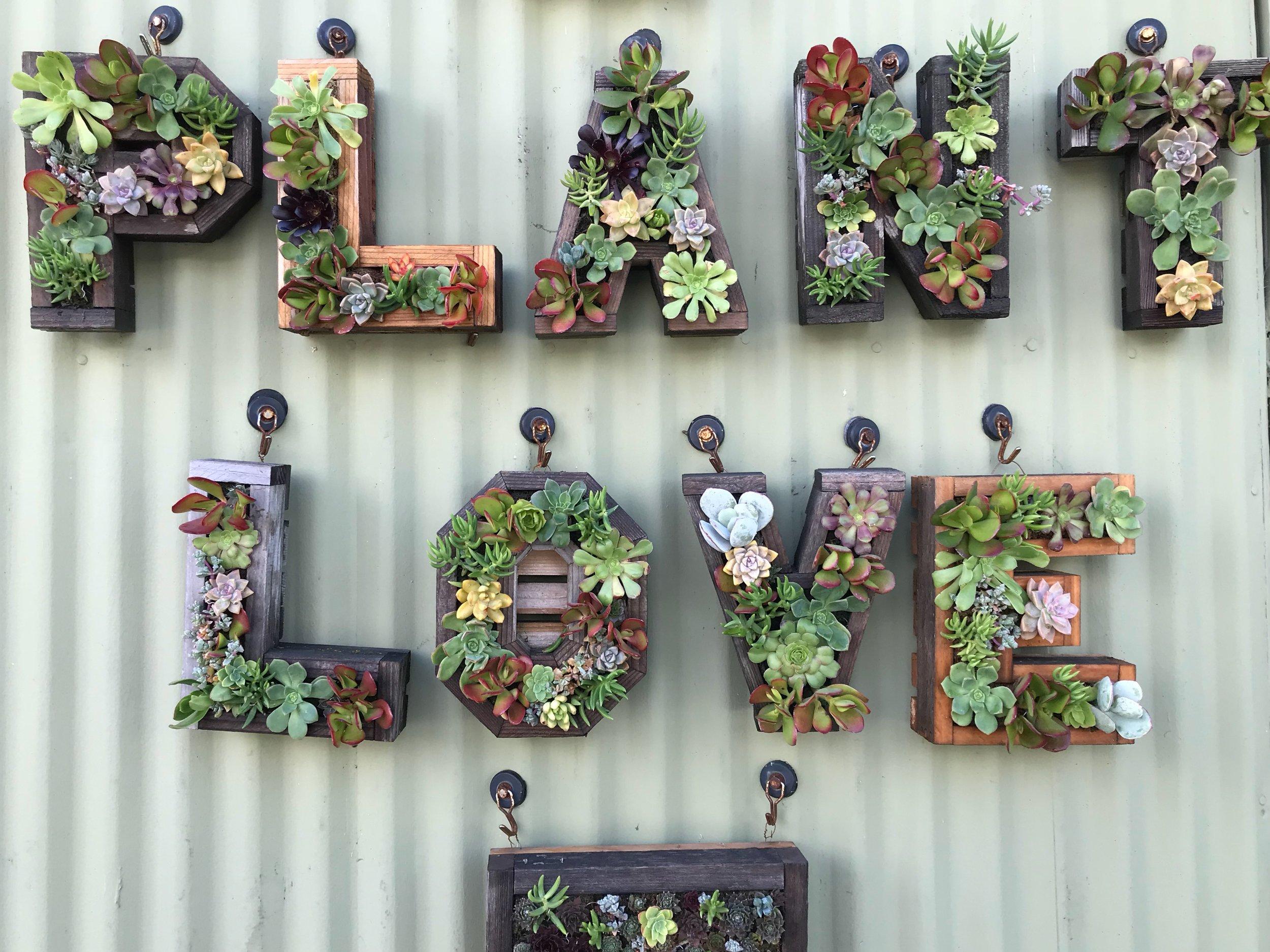 plant love.JPG