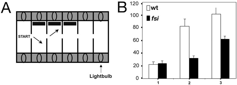 Figure 3. fsi fry with reversed asymmetries emerge into successive compartments with less delay than their normal siblings when encountering a novel visual object. (A) Fry are placed into the lit start compartment, and are then motivated to enter the next compartment by turning off the light in the start compartment and turning it on in the adjacent compartment. This is repeated for 3 successive compartments, each successive compartments feature a novel object (black stripe) on the side wall. (B) Fry are encountering a novel visual object upon emerging into the new compartment. Numbers 1, 2 and 3 on the horizontal axis show the number of consecutive compartments entered; the vertical axis shows the average delay of entering the next compartment after switching the light (in seconds).