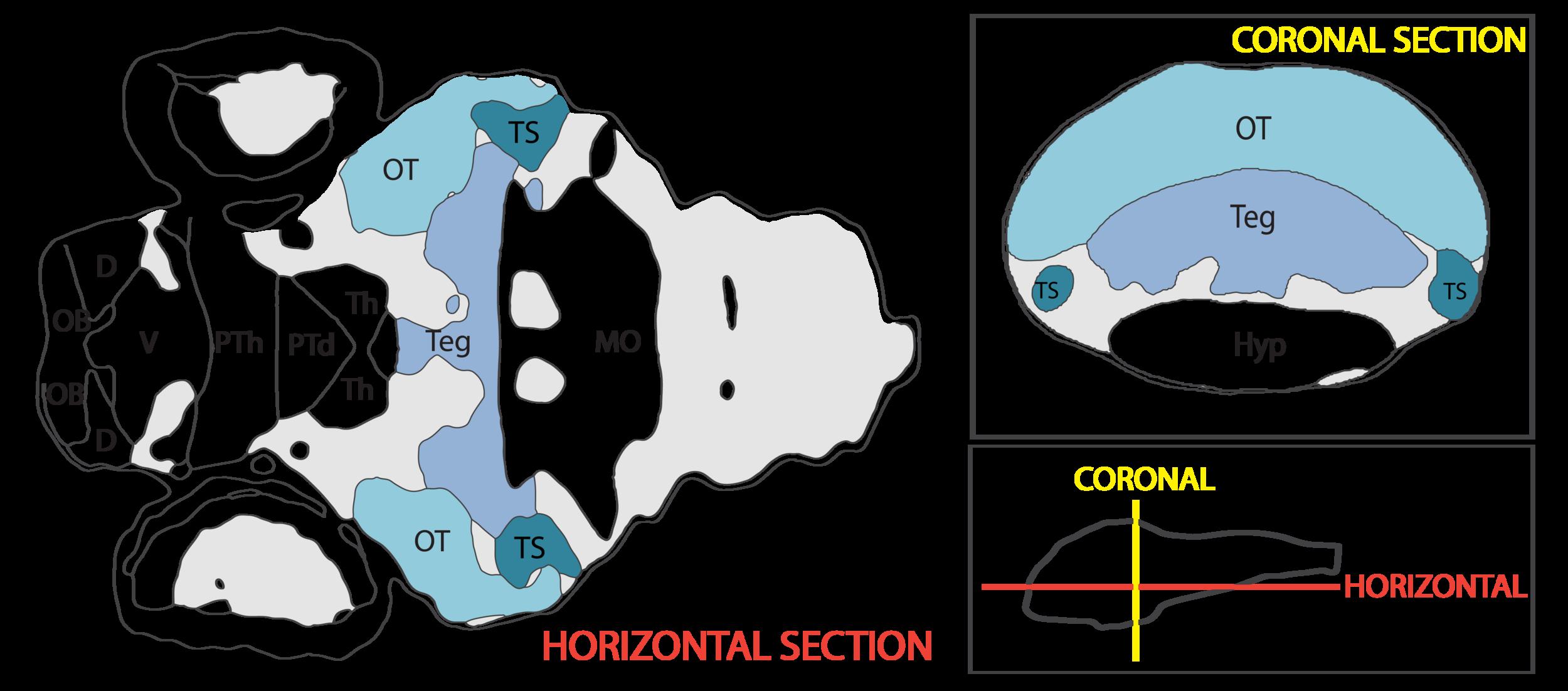 midbrain navigation vibez-42.png