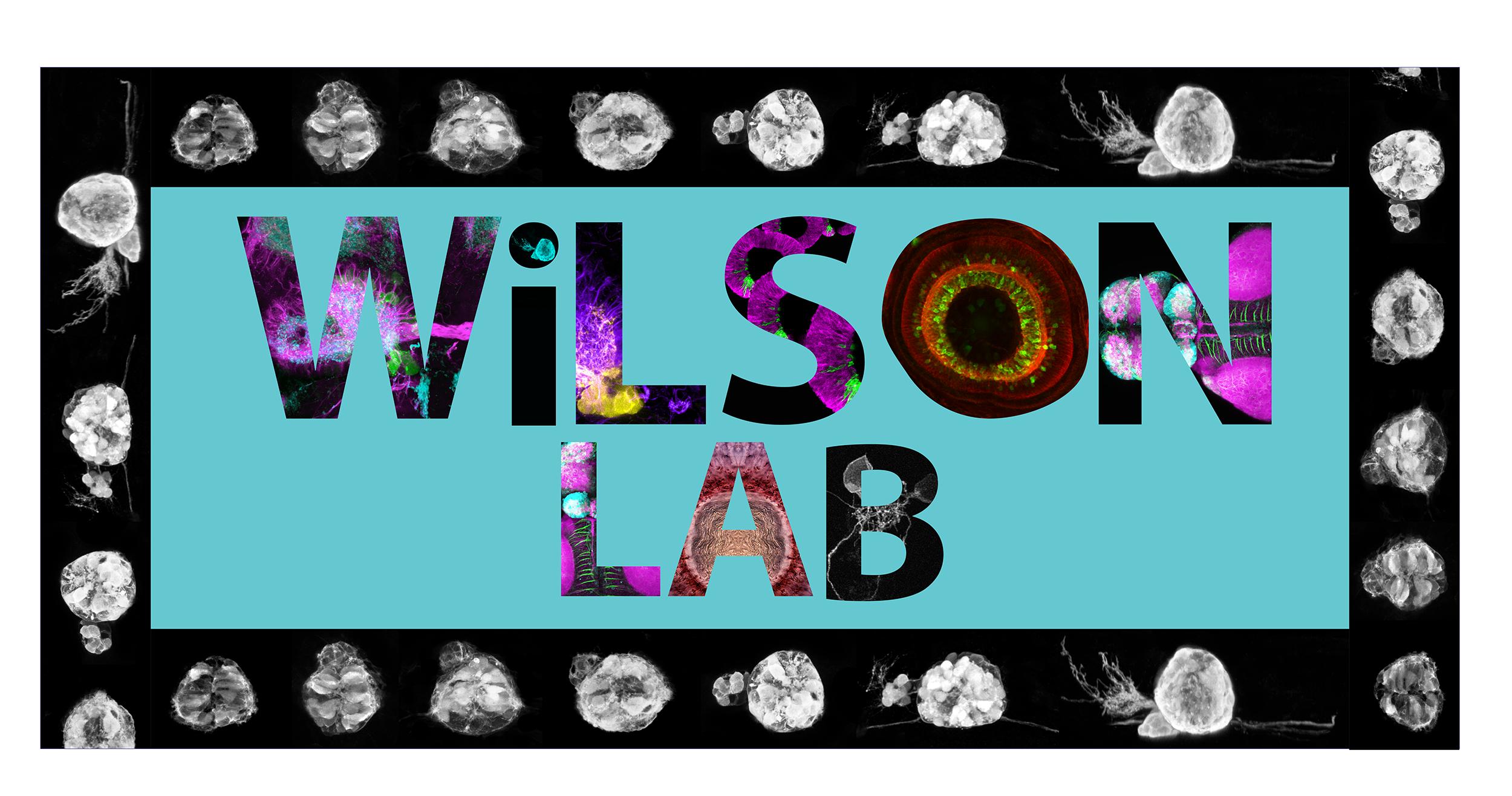 Wilson logo aqua-03.png